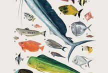 . desenhos . peixes .