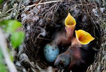 Nest/Nido