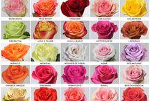 druhy květin