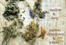 herbs, spices, plants and oils / by Alison D.