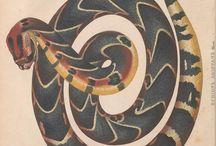 Encyclopaedic Illustrations: flora et fauna