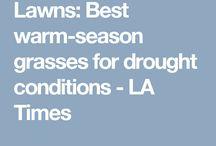 Plants: Lawns