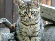 macskák <3