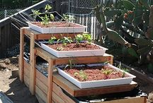 Gardening Ideas / Gardening tips and inspiration for growing your own food.