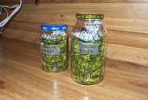 Food / Food Recipes and Food Preservation / by Jennifer Middleton Ludy