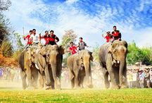 Elephant Race In Dak Lak, Vietnam / Visit Dak Lak Province in springtime, you should not miss the Elephant Race Festival, celebrated in the third lunar month. Attending the festival, you will be lived in the boisterous atmosphere of the echo of gongs and the spectacular performances of the elephants.