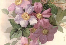 картинки-Цветы1
