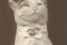 Cats of questionable taste