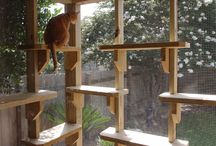 Catio / cat enclosure