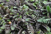 Plants / by Jessi Peterson