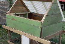 My Chicken Coop