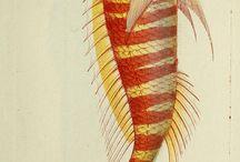 Natural History; prints and drawings of Nature