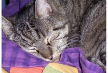 Cats and Quilts / Cats in quilts, cats on quilts, cats beneath quilts, cats beside quilts...