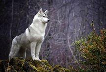 Regno animale / animals