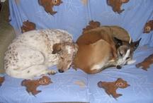 My Wonderful Doggies!
