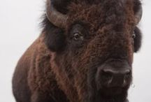 Bison Books from the University of Nebraska Press / Founded in 1941, the University of Nebraska Press is a nonprofit scholarly and general interest press that publishes 170 new and reprint titles annually under the Nebraska, Bison Books, and Potomac Books imprints.
