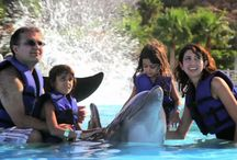 IWTTT - Swim With Dolphins Cabo San Lucas Los Cabos Mexico / I promote for Sandos Resorts Vacation Club which offers a 5 night all inclusive stay for attending their timeshare promotion!  http://IWantToTravelTo.com