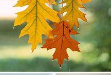 Jesenné námety