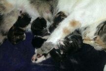 Newborn kittens - újszülött kiscicáink