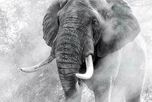 my love for elephants
