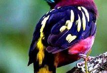 Különleges madarak
