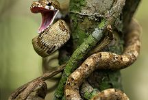 ANIMALS: Reptiles Frogs & ander gediertes