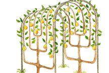 Espalier fruit trees