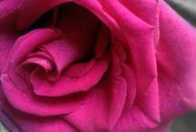 flores / ideia para casamento ou arranjos