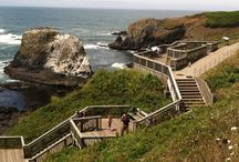 Get Outside / Enjoy nature and all the Central Oregon Coast offers. / by Wilder Newport