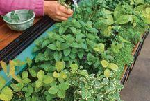 illatos fűszerkert erkélyre, teraszra - herb garden on balkony