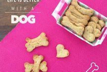 Biscoito para cães