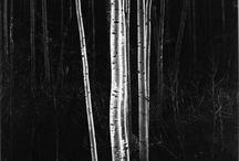 Ansel Adams / Images