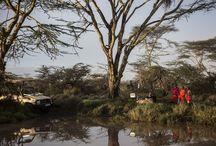Kenia / Masai Mara, Amboseli und Tsavo, weltberühmte Parks, doch lohnen sich gerade die wenig besuchten Regionen des Nordens wie der Samburu oder das Laikipia Plateau