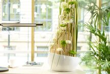 """Just chrys 2014/2015 - Neue Designs für das florale Mulitalent Chrysantheme / Lifestyle, Ambiente und florale Designs mit der Chrysantheme! Trendgerechte Inszenierungen für ein urbanes Publikum!  """"Ich tue mir etwas Gutes!"""" ist das Thema der neuen Kollektion just chrys 2014/2015, die Fachverband Deutscher Floristen e.V./FDF und Blumenbüro entwickelt haben. Die Designs sind den Leit-Motiven Wellness, Emotion, food and flowers, Lifestyle, Fashion und florale Präsente zugeordnet."""