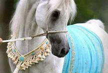 Arabian horses / My favourite *-*