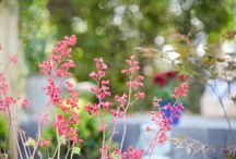 """""""Les parfums sont les sentiments des fleurs"""" - H. Heine"""