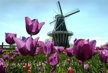 Tulip Time Holland,MI