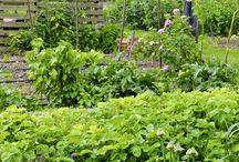 Jardin/permaculture/idees