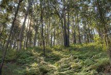 Hiking | Moreton Bay Region