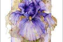 Irris Orchide
