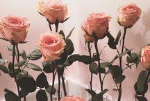 misc: flowers.