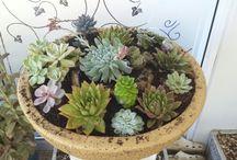 ann plants