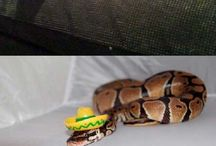 Snakes / Because they're beautiful.