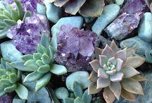 PIANTE e  FIORI / piante grasse,fiori di ogni tipo