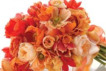 "Poppys ""My Favorite Flower"" / by Jacque Braun"