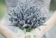 Wedding ideas / by Judy Morgan