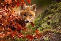 Magic of Autumn