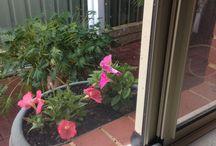 My pretty flowers