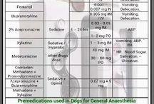 veteriner info