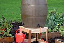 Rain Barrels and Watering Ideas